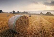 Plafonul propus de Comisie pentru subvenţia agricolă aprinde spiritele în Centrul Europei