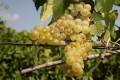 MADR: Buget 500.000 de euro pentru rețeaua de atașați agricoli