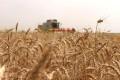 Măsuri financiare pentru susținerea agricultorilor/ 3.600.000.000 lei, împrumut pentru Agricultură