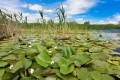 Finanțare UE/ Până la 20 de milioane de euro, 100%, pentru conservarea biodiversității și refacerea ecosistemelor