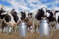 Ministerul Agriculturii/Producătorii de lapte mai pot depune cereri de ajutor financiar până pe 6 iunie