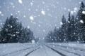 Dodonea, fulgi mici de zăpadă!