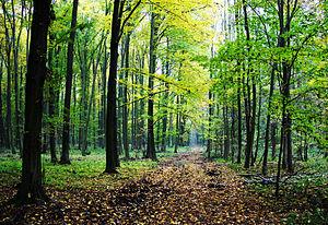 AFIR/Sprijin financiar de 50 milioane euro pentru prima împădurire