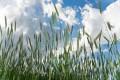 Efect Brexit/ Comisia Europeană propune scăderea fondurilor acordate agriculturii