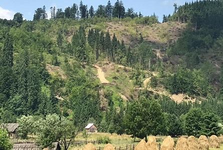 Noroc cu UE/ Comisia cere României să oprească tăierile ilegale de pădure